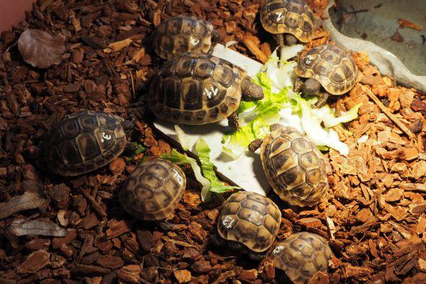 schildkröten wachen nicht auf