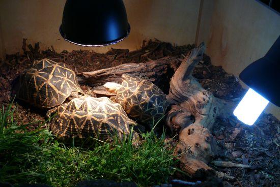 uv lampe schildkröte
